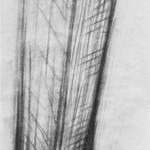 Kohle auf Papier, 160 x 36 cm, 2008